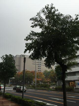 2014-11-12.jpg
